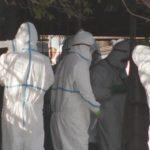 豚コレラの治療法は?高い致死率が特徴、岐阜県で感染確認、4例目