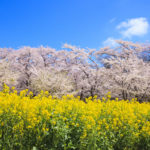 福岡の花見スポット、穴場・バーベキュー・駐車場情報|2019年版